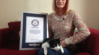 New World Record Set for Loudest Purr
