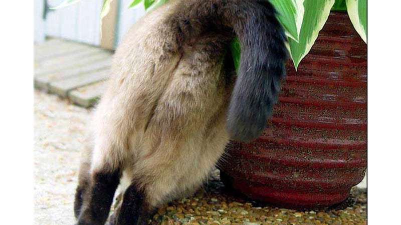 Important Question: Are Cat Butts the Cutest Butts?