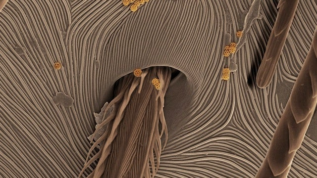 Under an electron microscope, spider skin is cooler than you might have imagined