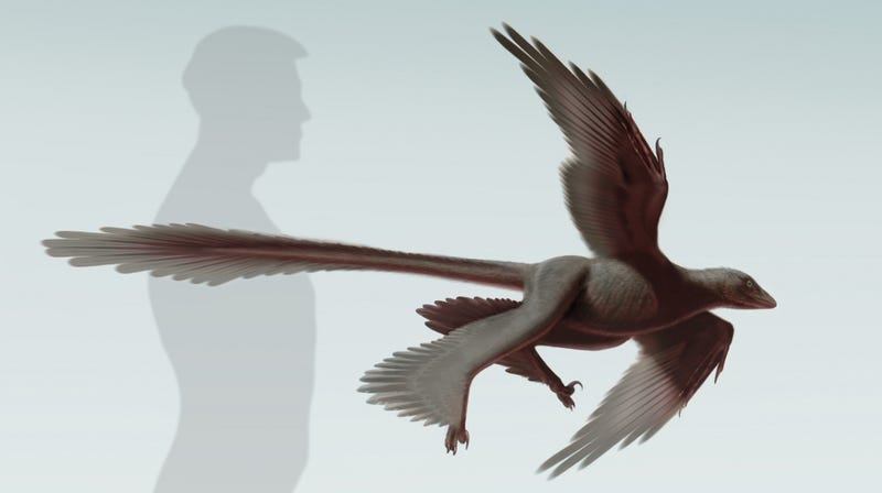The Largest Dinosaur Capable Of Flight Had Four Wings