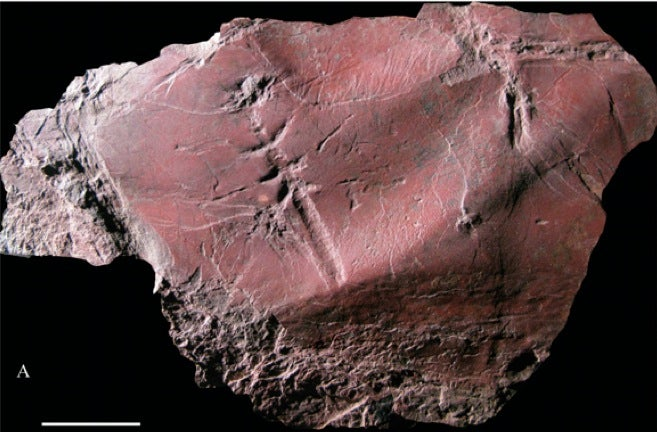 Found: The oldest flying insect fossil