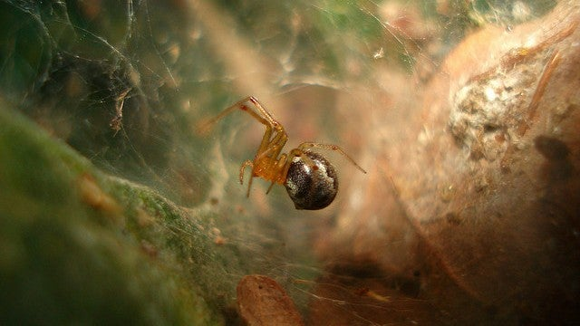 The Tricky Business of Spider Foreplay