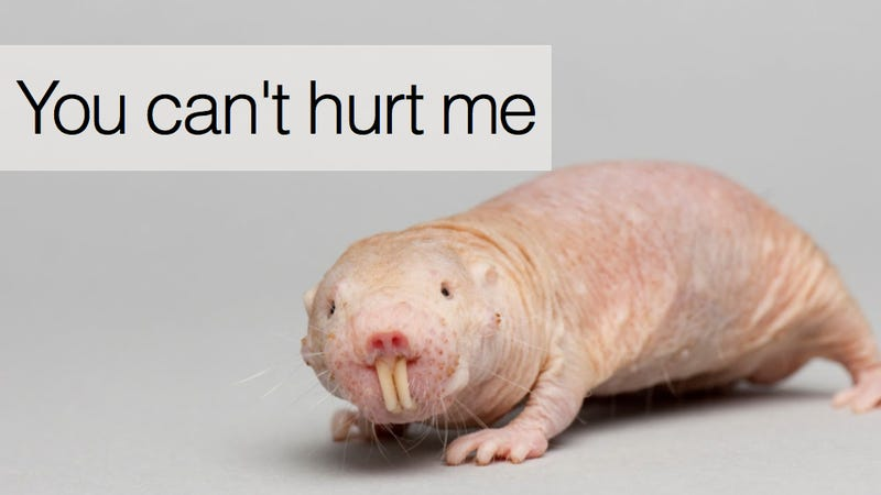 10 Reasons Naked Mole Rats Will Inherit the Earth