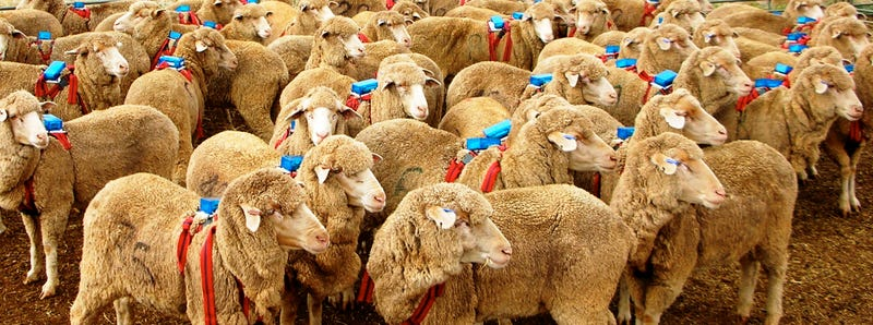 Scientists Have Found an Algorithm That Could Turn Us All Into Sheeple