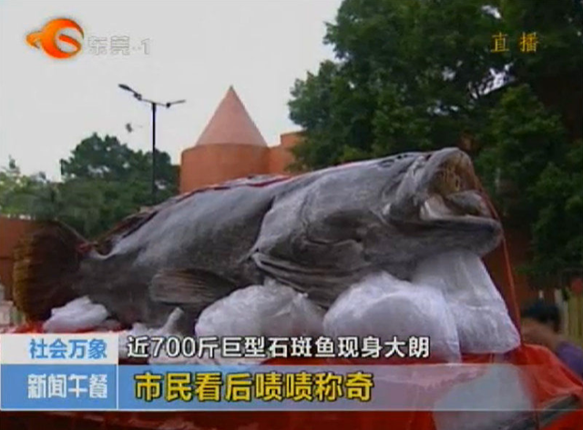 China's Monster Fish Ends Up in a Cheesy Photo Op