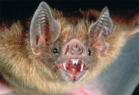Swarming vampire bats attack 500 people in Peru, killing 4