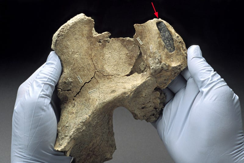Kennewick Man came from far away, says study
