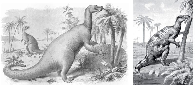 Illustrations of the Iguana-Toothed Dinosaur