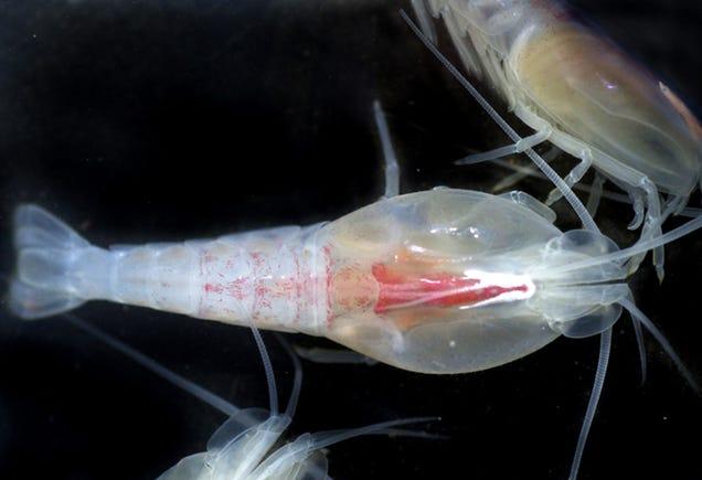 Así son las increíbles criaturas en las profundidades de los océanos 796833863169619785