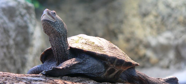 The Weird Reason Why So Many Turtles Are Delaying Flights at JFK