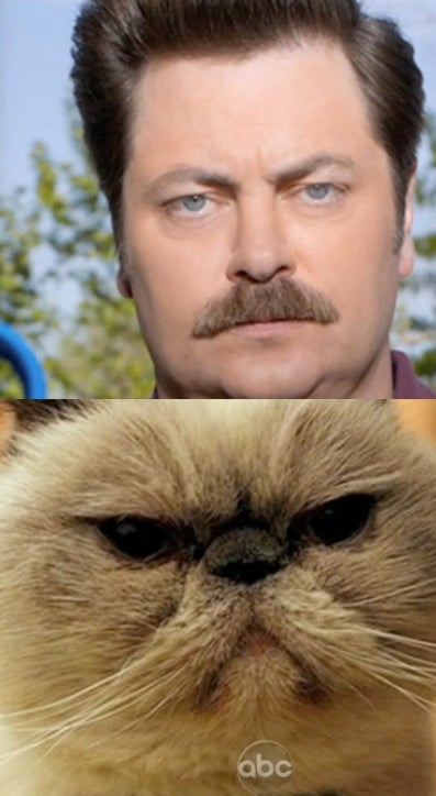 "Nick Offerman and Jimmy Kimmel Look at ""Cats That Look Like Ron Swanson"""
