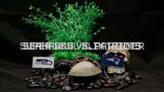 Psychic Clam Predicts Super Bowl XLIX Winner: Seahawks or Patriots?