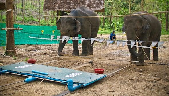 Have we been dramatically underestimating elephant intelligence?