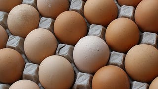 The Truth About Your 'Cage Free' Eggs