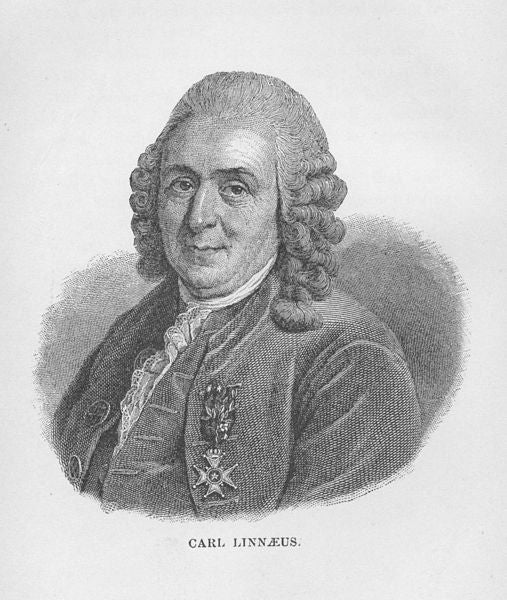Carl Linnaeus Debunked A Rumored Hydra Corpse