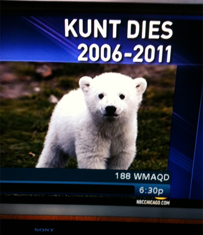 When Bad Typos Happen to Good Polar Bear Memoriams
