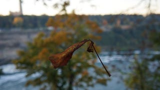 Found this Leaf Hanging Around Niagara Falls