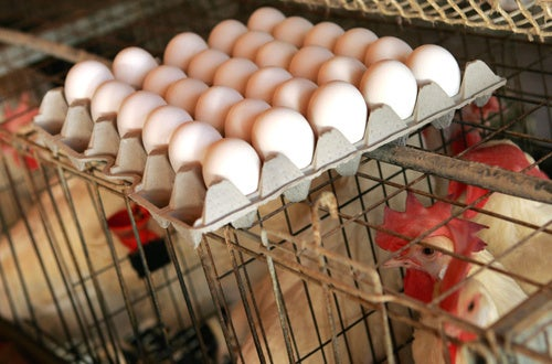 Iowa Egg Farm Detected Salmonella Hundreds of Times Over Last Two Years
