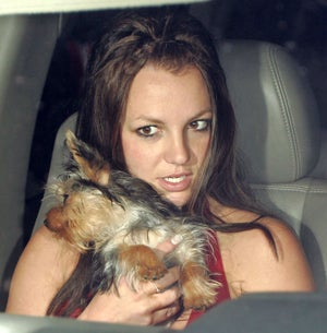 Dear Britney, We're Worried About Your Liver