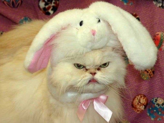 Some of the Ugliest Cats on the Internet