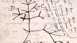 The Darwin Doodle That Changed Biology