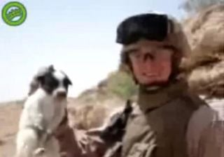About That Iraq Puppy-Throwing Video...