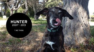 The Remarkable Tale of Hunter, the Real-Life Rescue Dog