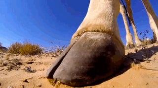 Here's What You Would See If You Were Kicked By A Giraffe