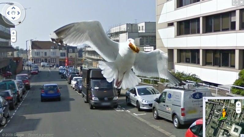 Google Street View, Meet Your Avian Nemesis