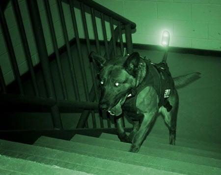 Is $20,000 K9 Storm Armor Enough to Protect Your Pup From Another Michael Vick Joke?