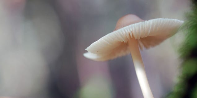 The Technology That Will Build Our Future May Be Found In Mushrooms