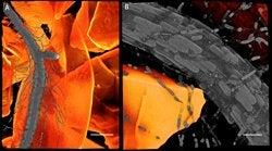 New transparent soil reveals the secret world of plant roots
