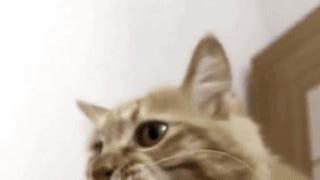 Keep Oppo Cat