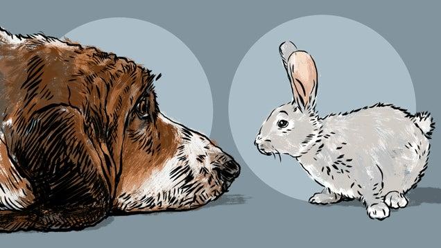 A Dog Meets a Rabbit