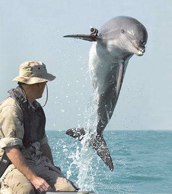 Dolphins Answer The Call of Duty In Marine Warfare