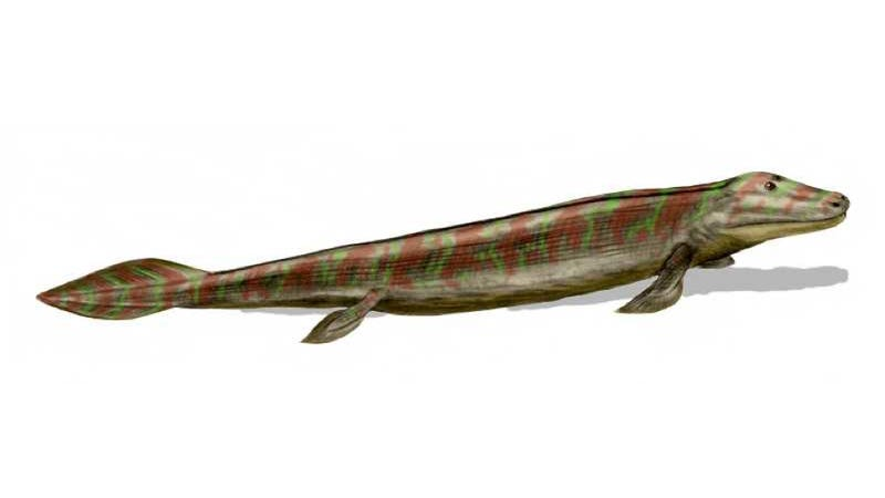 The First Fish To Walk On Land Was Basically A Subaru WRX STI
