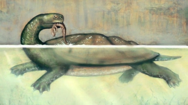 This colossal prehistoric turtle could snap other turtles in half