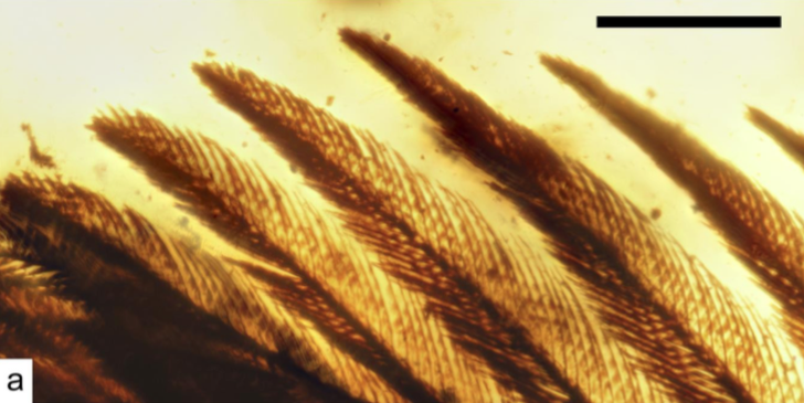 99 Million-Year-Old Bird Wings Found Encased in Amber
