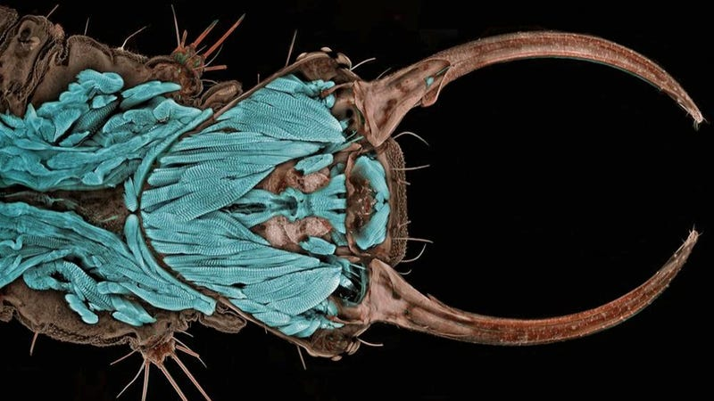 Incredible microscopic images from Nikon's Small World Photomicrography Competition