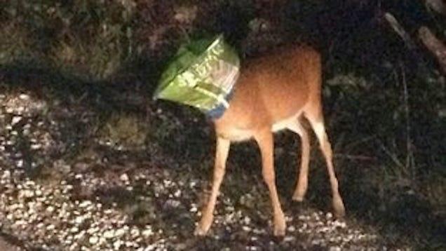 Deer with Dorito's Bag Stuck on Head