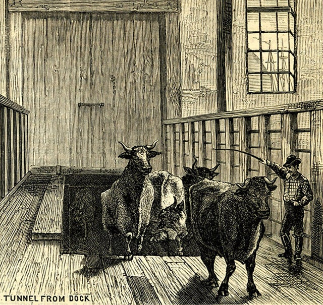 The Lost Cow Tunnels of New York City