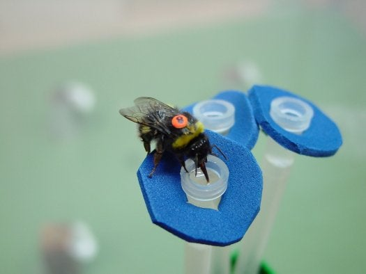 Bees Solve Hard Computing Problems Faster Than Supercomputers