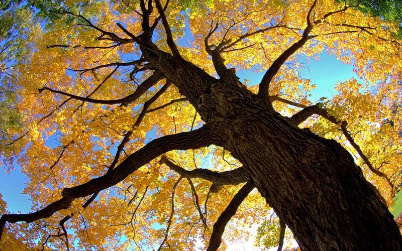 Shooting Challenge: Fall Leaves 2012