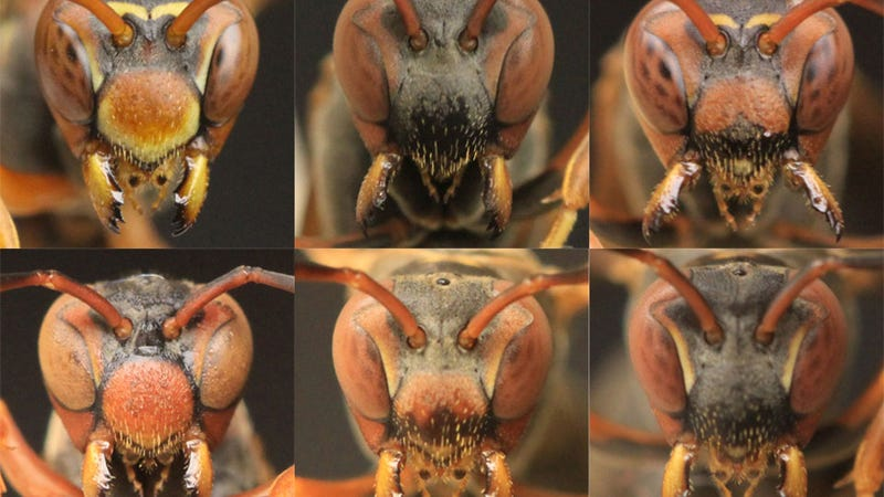 Motherf*cking Wasps Recognize Each Other By Their Faces