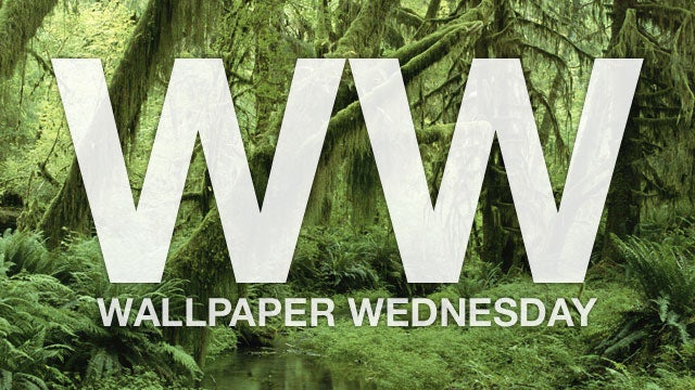Take Your Desktop for a Walk Through the Forest with These Wallpapers