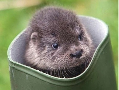 This Little Otter Is Asking for a Kiss on Its Head