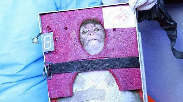 Iran sends a monkey into space, is mortified beyond belief