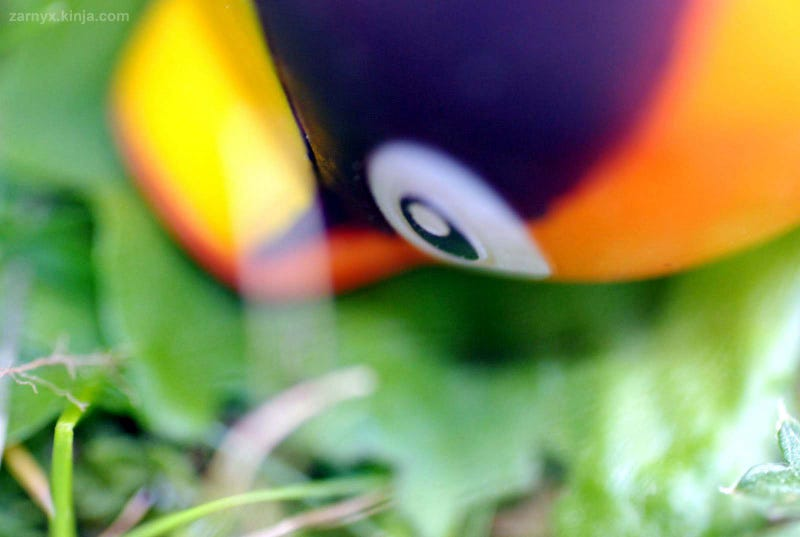Pokémon (OH) Snap!: Hiding in the Tall Grass...(Part I)