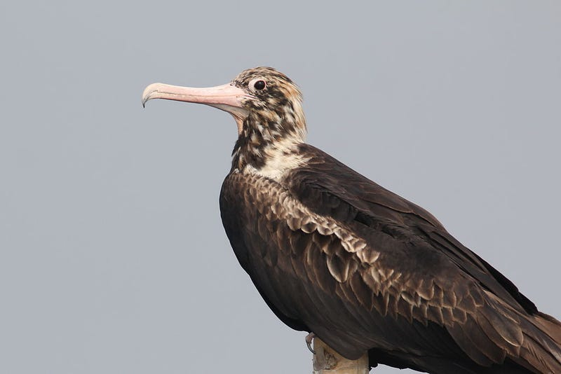 These Are The World's Weirdest Birds