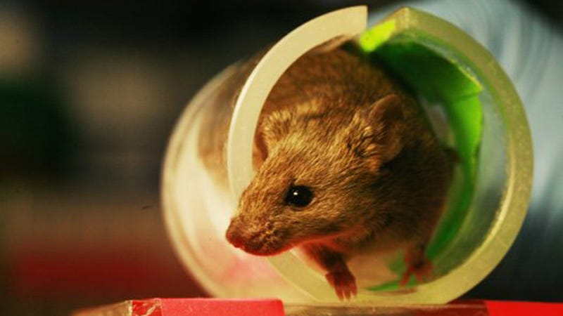 A Mouse Made Just For You Will Be Your Medical Avatar